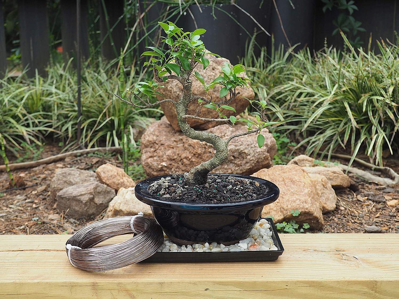 2.0mm Noir Grow A Bonsai Tree Aluminium anodis/é 2.0mm formation Bonsai fil 250G Grand Rouleau 95 pieds