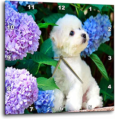 3dRose DPP_80886_3 Adorable Bichon Frise Puppy Among Hydrangeas Wall Clock, 15 by 15-Inch
