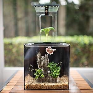 15 Best Betta Fish Tanks 2019 Reviews Top Picks Guide