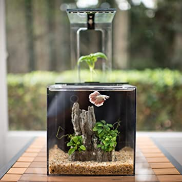 ecoqube aquarium desktop betta fish tank for living office and home dcor betta living home office