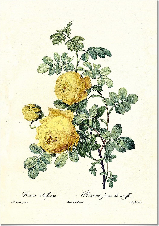 Panorama Póster Rosa Amarilla Vintage 50x70cm - Impreso en Papel 250gr - Láminas Hojas Verdes - Láminas para Enmarcar - Cuadros Decoración Salón - Cuadros Botánica - Cuadros de Plantas