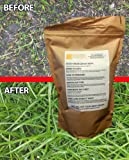Hard Wearing Grass Seed. Fast Growing, Premium Grass Seed. Tough & UK Tailored for Lush Green Lawns in Sun or Shade. Quality Grass Seed