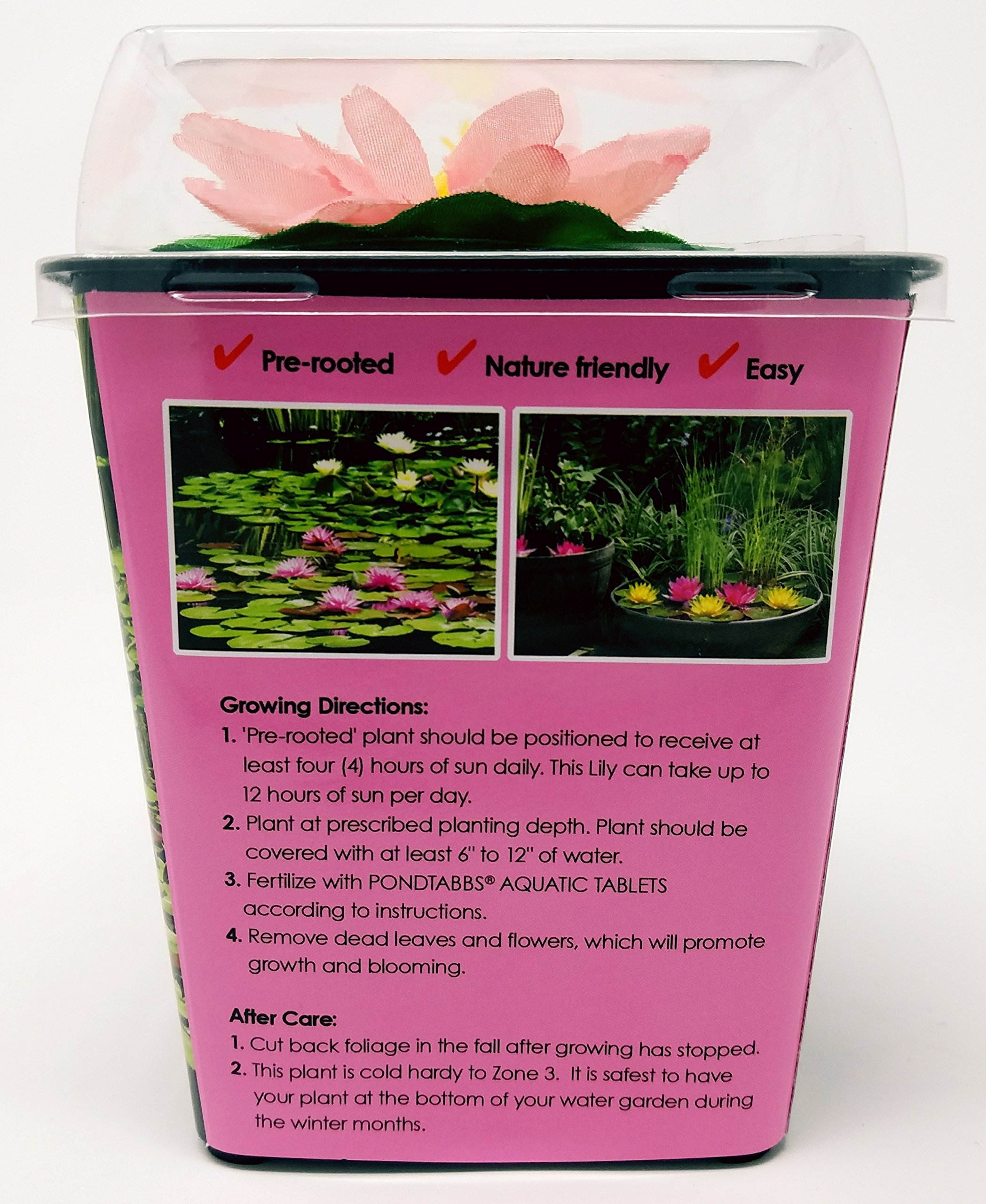 Live Aquatic Hardy Water Lily | Pre-Grown, Pre-Rooted, Hardy Water Lily for Your Pond or Patio Water Garden | Drop-N-Grow Convenience -Pink (Nymphaea 'Pink Venusta') by Chalily (Image #4)