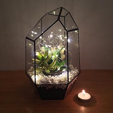 Gem Terrarium With Live Succulent Plants And Led Fairy Lights