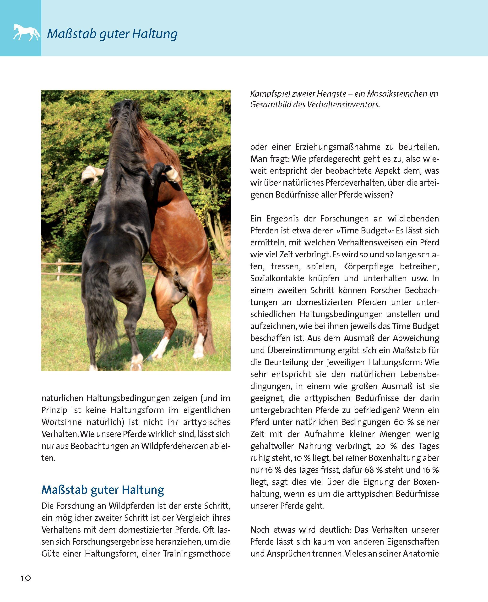 Pferd und Reiter: Verständnis und Verständigung Die Reitschule ...