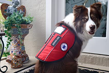 42db41ba29a ALL ACCESS CANINE Emotional Support Animal ESA Dog   Service Dog Vest  CUSTOM Reflective Harness PACKAGE