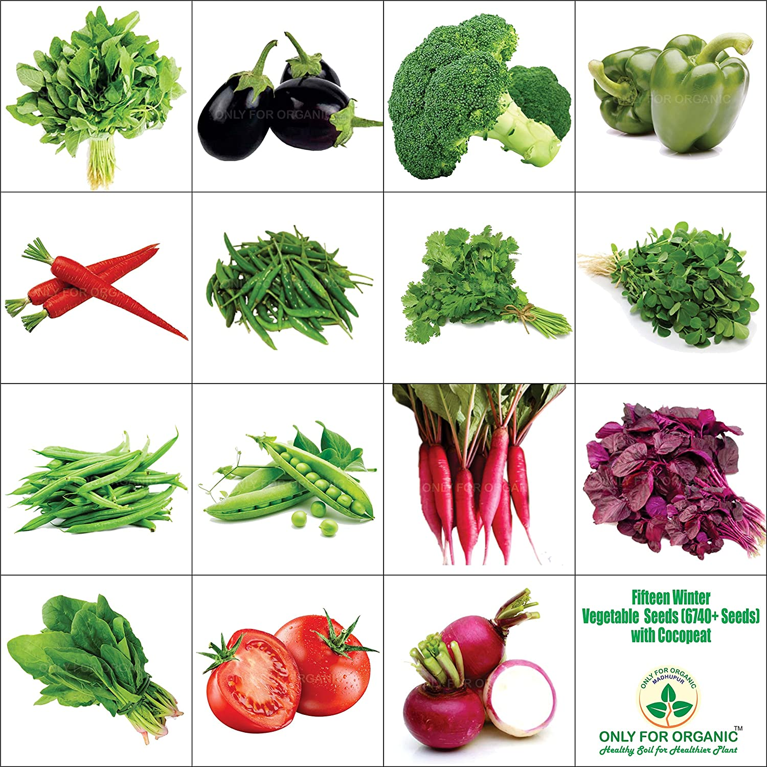Only For Organic Fifteen Winter Vegetable Seeds(6700+