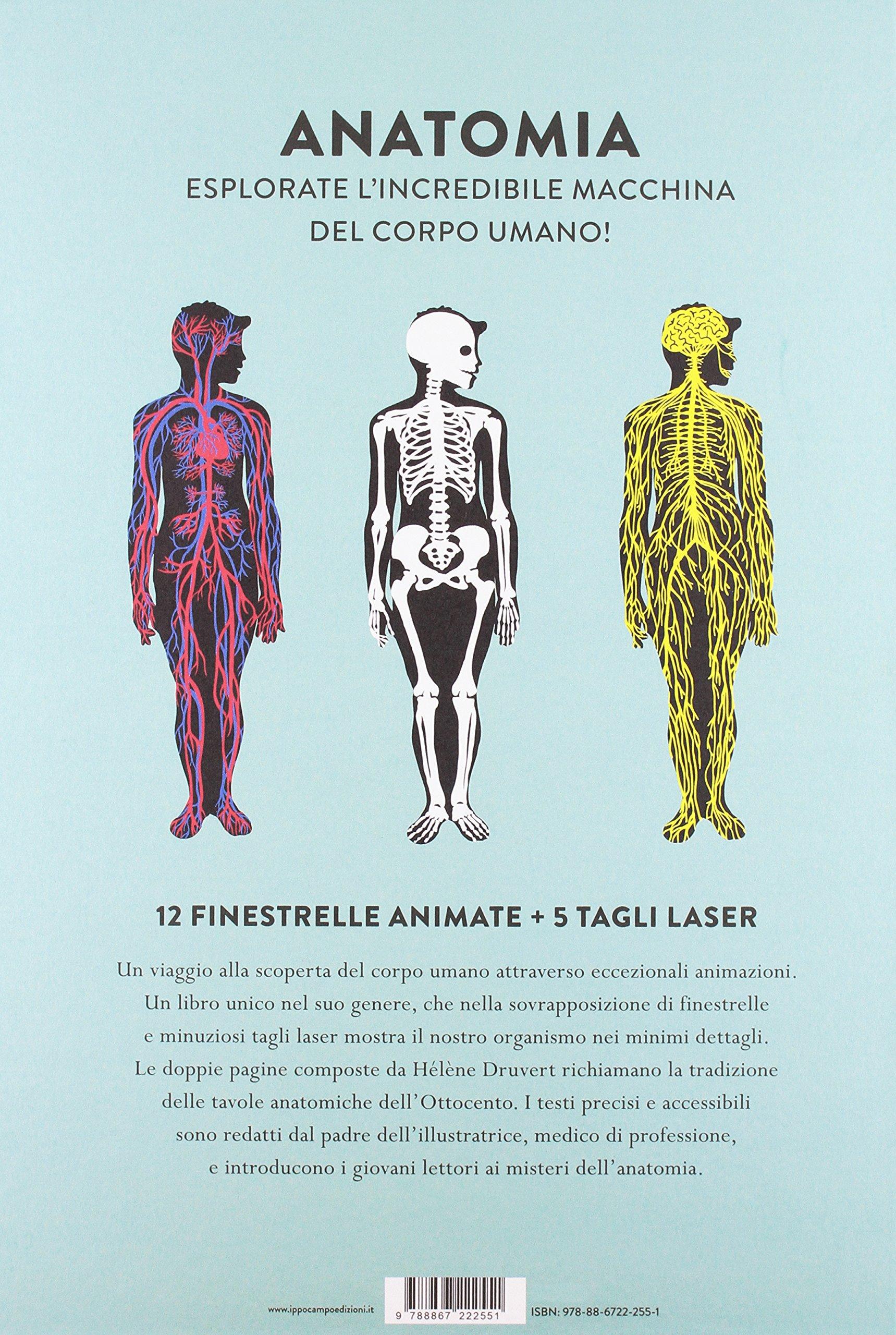 Anatomia. Sezioni e animazioni per osservare il corpo da vicino ...