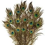 Lot de 15 plumes de paon naturelles 80cm de long - Rosemarie Schulz