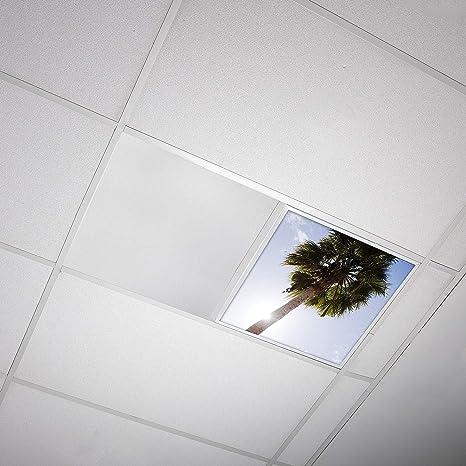 Octo Lights Fluorescent Light Covers 2x2 Fluorescent Light Filters Ceiling Light Covers For Classroom Kitchen Office Tree 001 Amazon Com