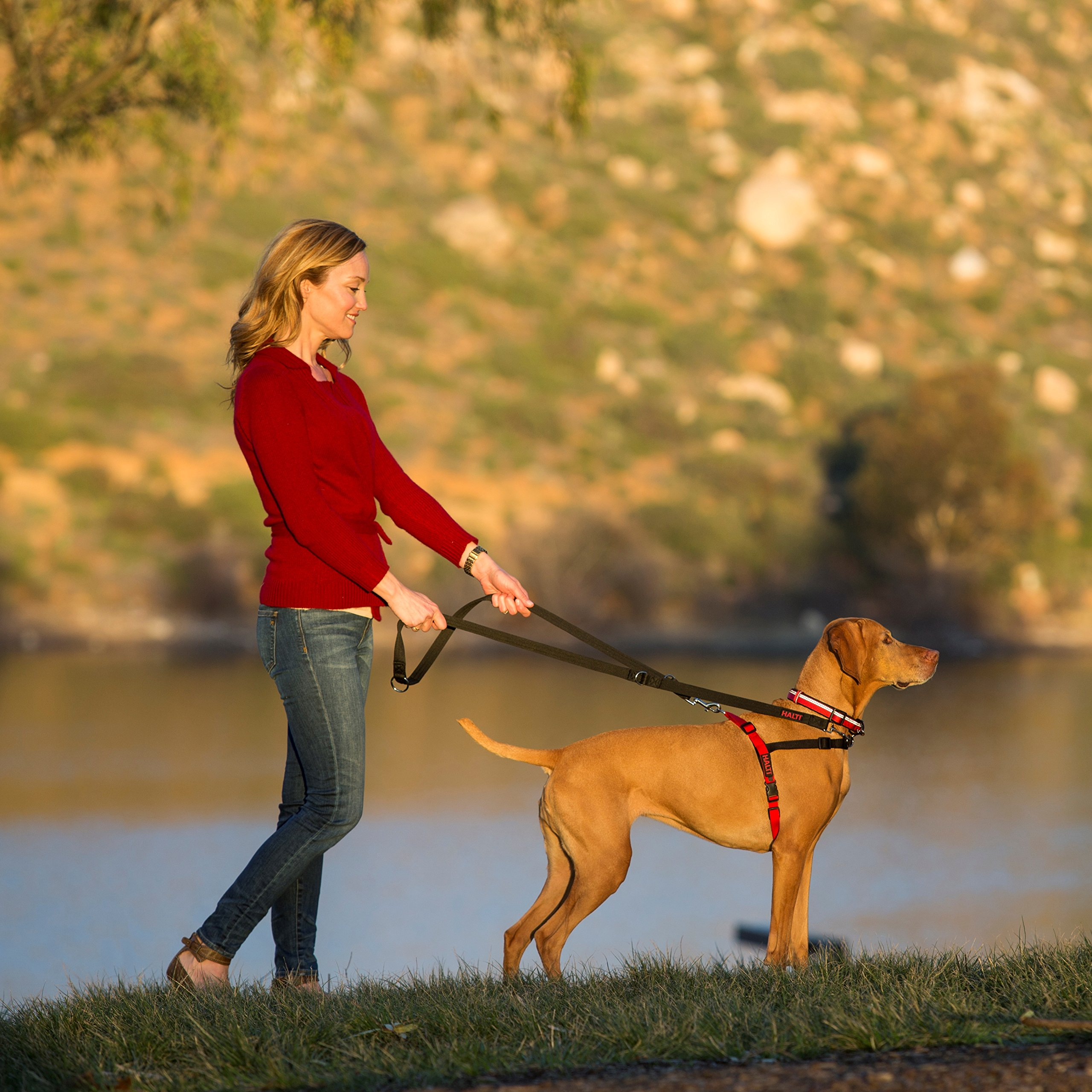 The Company of Animals - HALTI Training Harness - Durable and Adjustable - Comfortable Padded fit - Medium - Black & Red by The Company of Animals (Image #3)