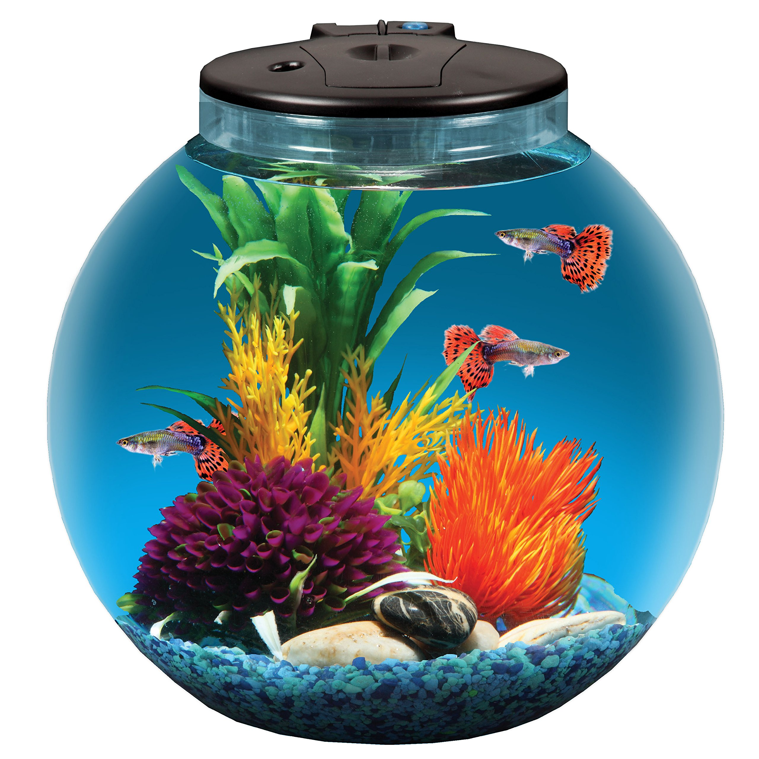 Koller Products AquaView 3-Gallon Aquarium with Power Filter and LED Lighting - AP30000GF-FFP by Koller Products