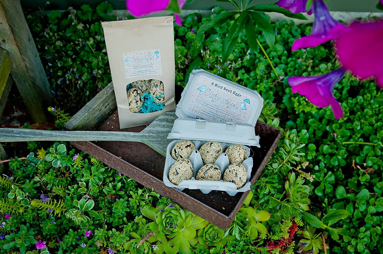 Set of 6 Solid Bird Seed Eggs in Paper Carton (Refills for wire nest)