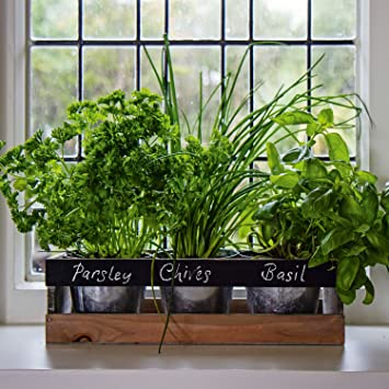 Indoor Herb Garden Kit - by Viridescent - Wooden Windowsill ...
