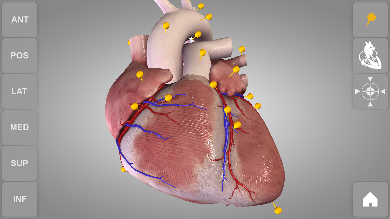 Amazon.com: Heart - 3D Atlas of Anatomy: Appstore for Android