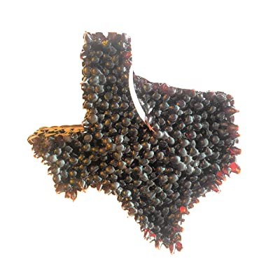 Smelldatz Long Lasting Leather Scented Hanging Air Freshener Car Air Freshener Car Candle Brown Texas: Home & Kitchen