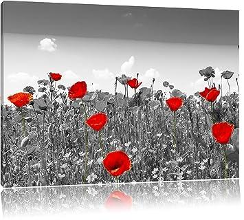 Schoner Rot Leuchtender Mohn Schwarz Weiss Format 80x60 Auf Leinwand