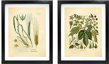 Ink Inc  Craft Beer Art Print – Hops and Barley Vintage Botanical Drawing –  8x10 Matte Unframed – Great Gift for Homebrewers and Beer