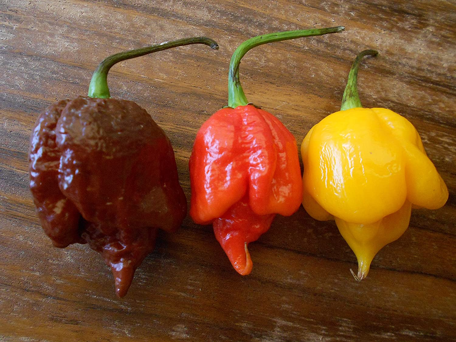Trinidad Scorpion Mix ***Brown-Red-Yellow*** 30 Seeds -XXXL-HOT-