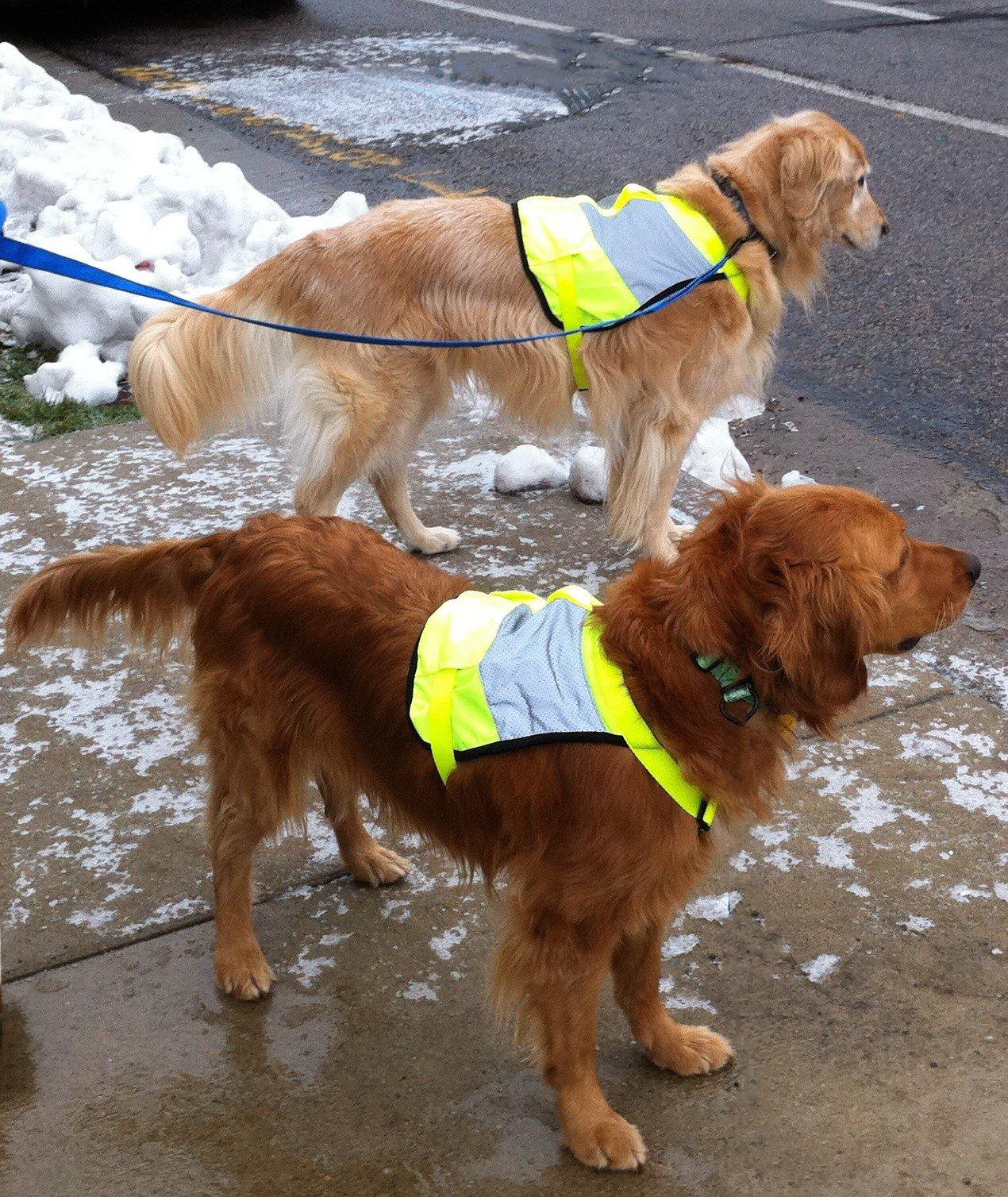 Stunt Puppy Go Dog Glo High Visibility Dog Vest, XS/S