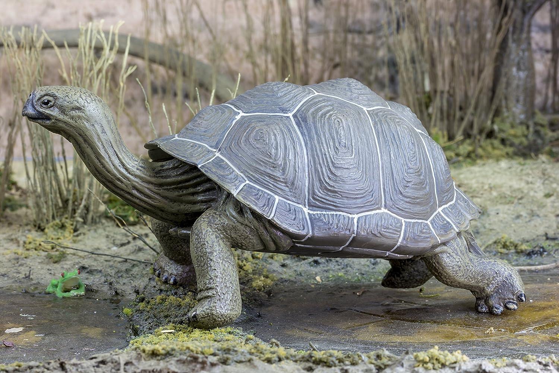 amazon com safari ltd incredible creatures galapagos
