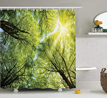 Farm House Decor Collection The Warm Spring Sun Shining Through Canopy Of Tall Beech