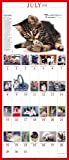 The 365 Kittens-A-Year Picture-A-Day Wall Calendar