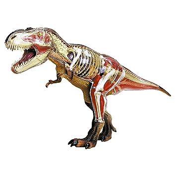 HCM Kinzel 556651 - Anatomie: Tyrannosaurus Rex (39 Teile) - 3D ...