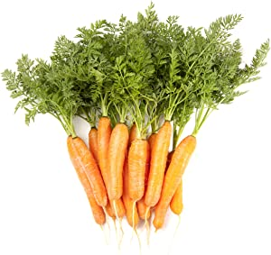 Carrot Vegetable Seeds for Planting Home Garden Outdoors - Little Finger Baby Carrot Seeds!