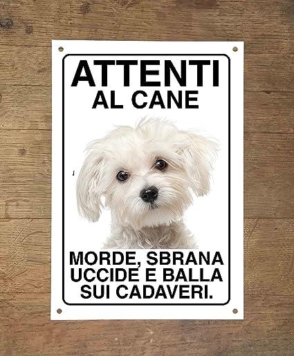Maltese Attenti Al Cane Morde Sbrana Uccide E Balla Sui Cadaveri