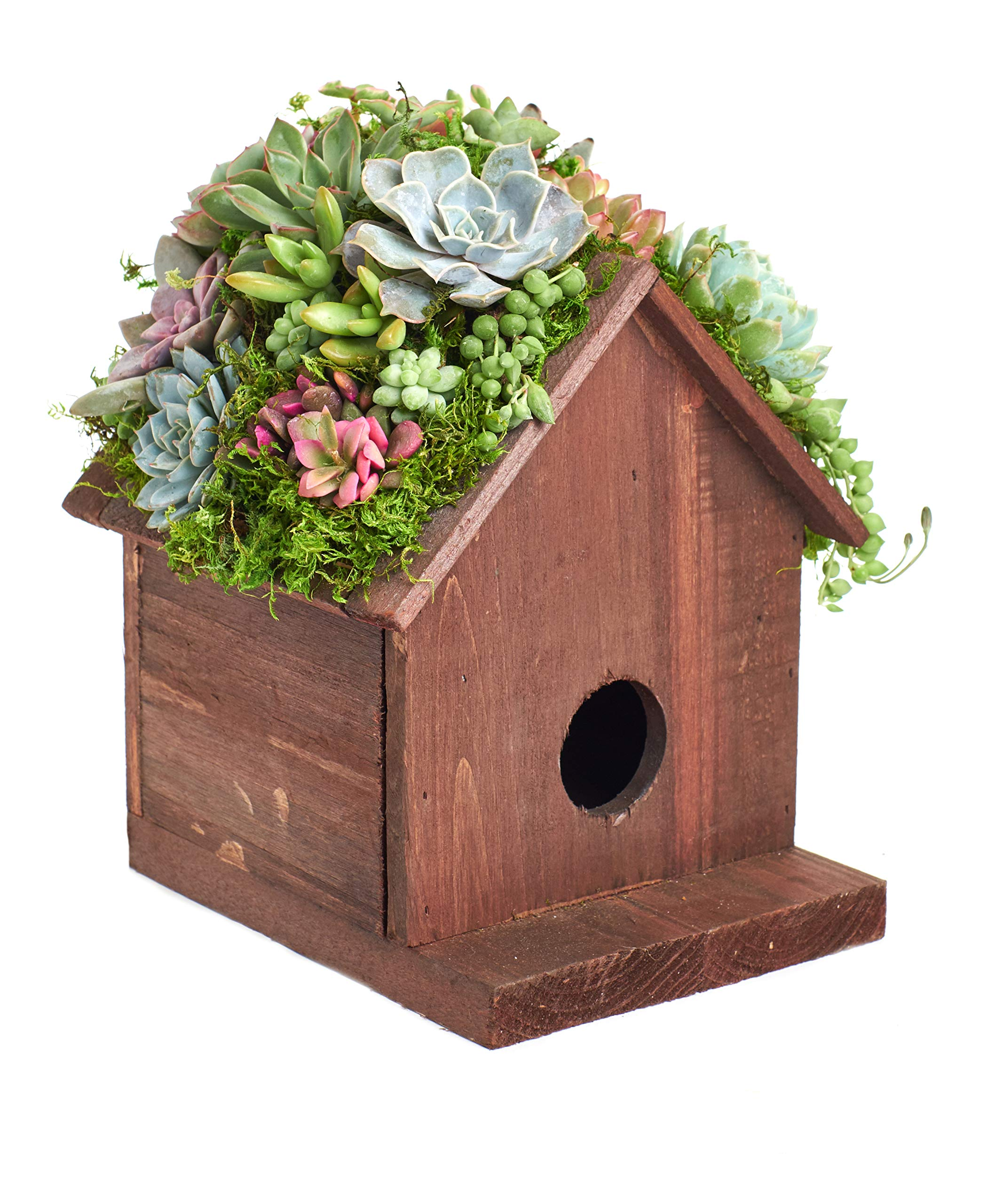 Shop Succulents BIRDHS-20-SUC-KIT Living Succulent Kit Birdhouse Planter