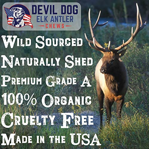 Devil Dog Pet Co Antler Dog Chew – Premium Elk Antlers for Dogs – Long Lasting Dog Bones for Aggressive Chewers – No Mess No Odor – Wild Shed in The USA – Veteran Owned