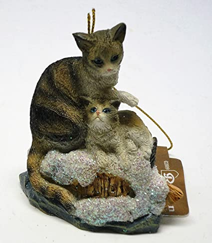 Grey Tabby Abyssinian Cat