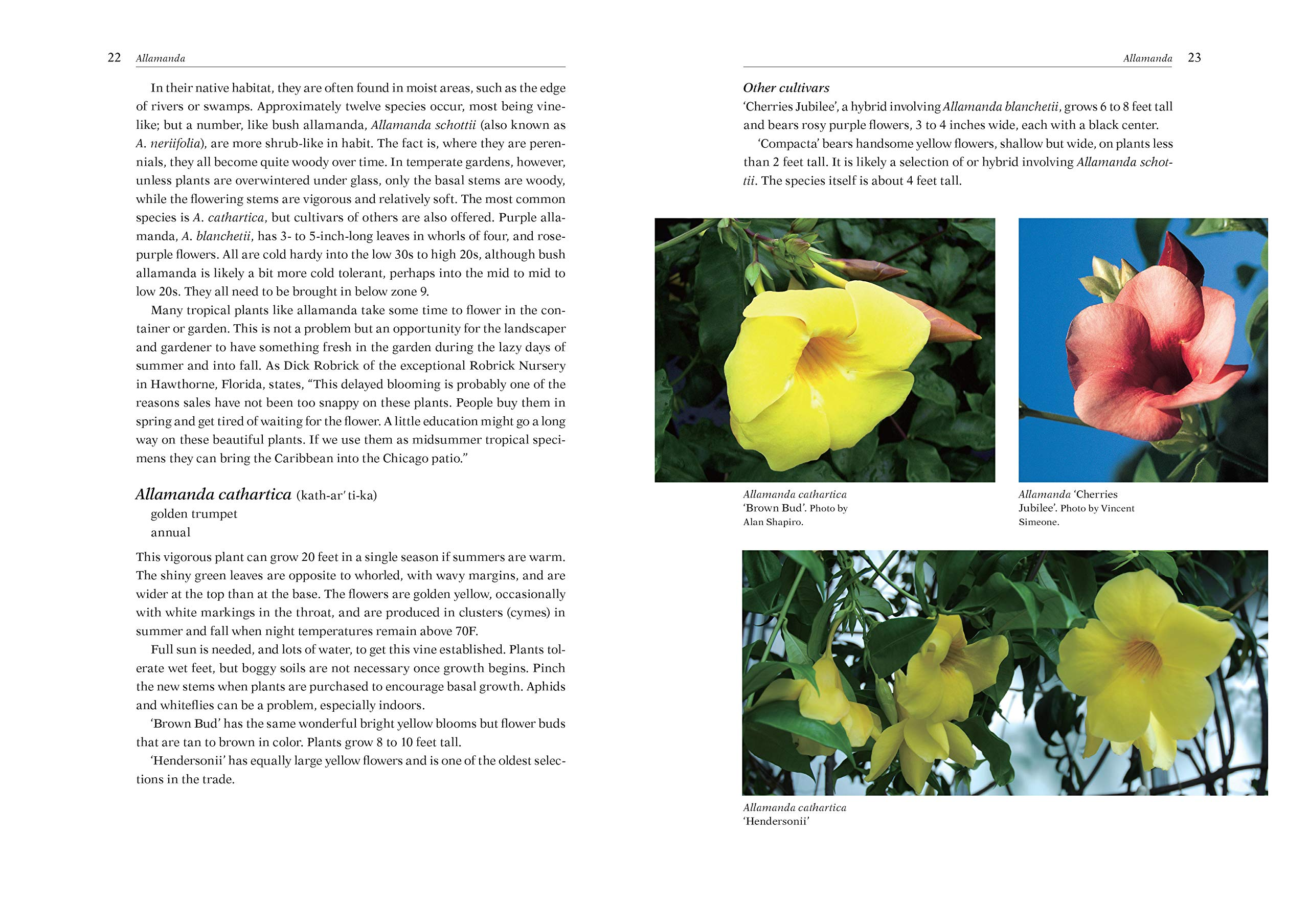 Armitages Vines and Climbers: Amazon.es: Armitage, Allan M ...