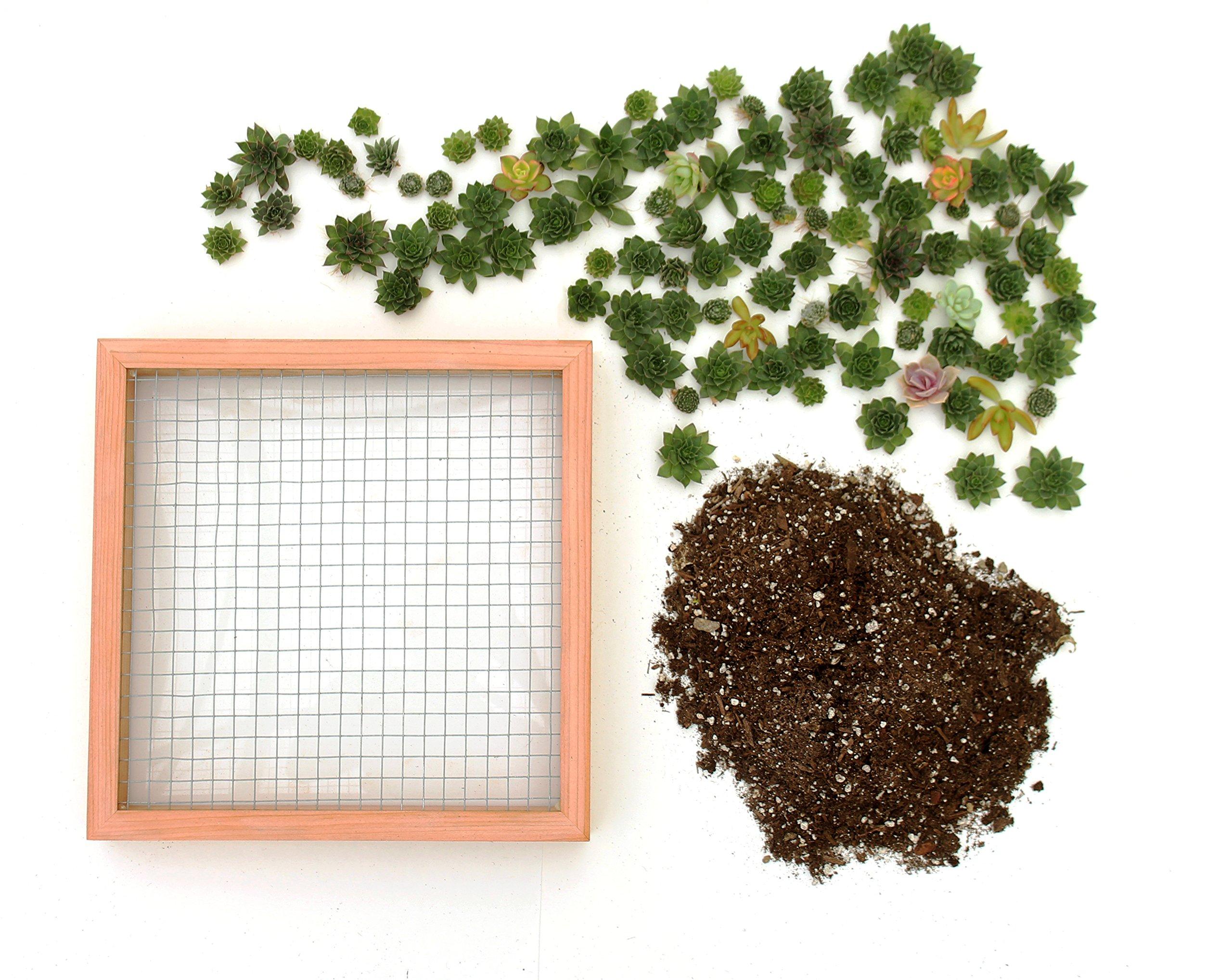 Succulent Gardens Large Living Picture Planter DIY Kit, 12''sq. Frame, Multicolor