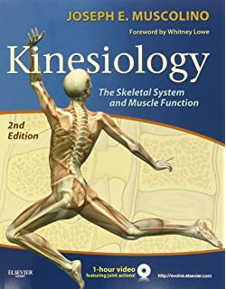 Introduction to kinesiology studying physical activity third kinesiology the skeletal system and muscle function 2e fandeluxe Images