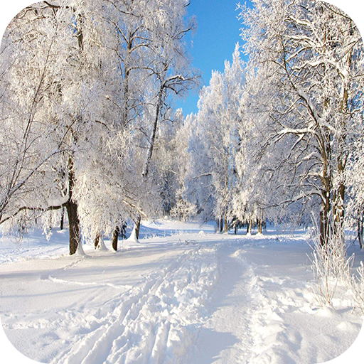 Snow 4k Wallpaper Amazones Appstore Para Android