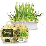 Ipet Green Digestive Grass Graminha Para Gatos 50G IPET para Todas Todos os tamanhos de raça Todas as fases - Sabor Outro