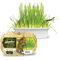Ipet Green Digestive Grass Graminha Para Gatos 50G IPET para Todas Todos os tamanhos de raça Todas as fases - Sabor…
