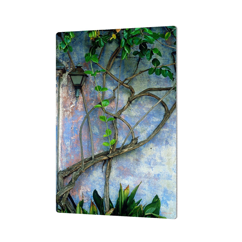 ArtWall Kathy Yates 'Vine and Wall' Artmetalz Aluminum Print, 16 by 24'