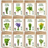 SEEDRA 12 Herb Seeds Variety Pack Indoor and Outdoor Planting - 3500+ Seeds - Non GMO and Heirloom - Basil, Thyme, Lavender,