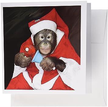 Amazon 3drose christmas monkey greeting cards 6 x 6 inches 3drose christmas monkey greeting cards 6 x 6 inches set of 12 m4hsunfo
