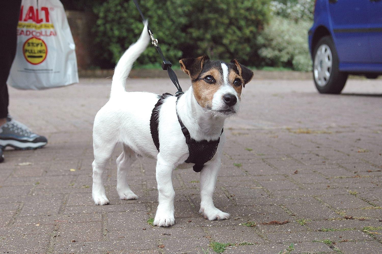 Company of Animals Anti-Zug Hundegeschirr