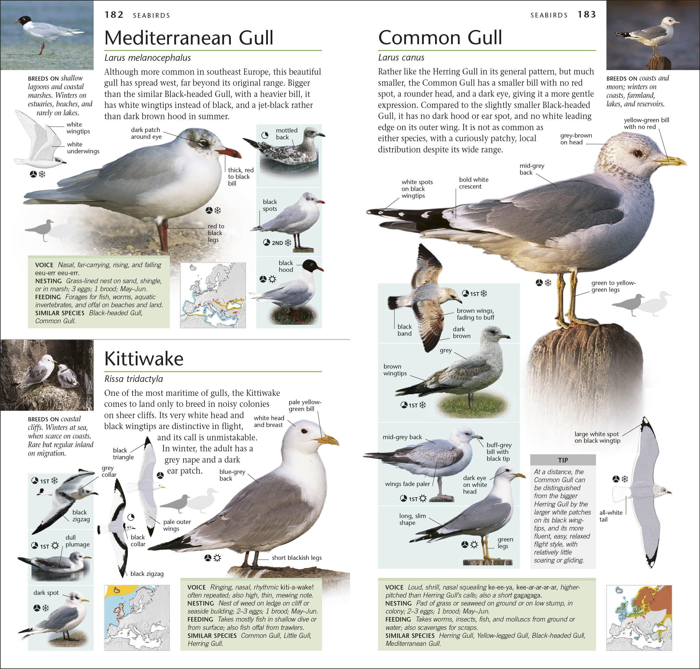RSPB Pocket Birds Amazoncouk DK 9781405394567 Books