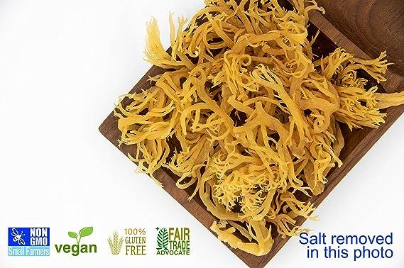KARIBBEAN FLAVOURS Musgo irlandés súper - (5 pack) wildcrafted - NO OGM - vegana - prima 15 Oz: Amazon.es: Salud y cuidado personal