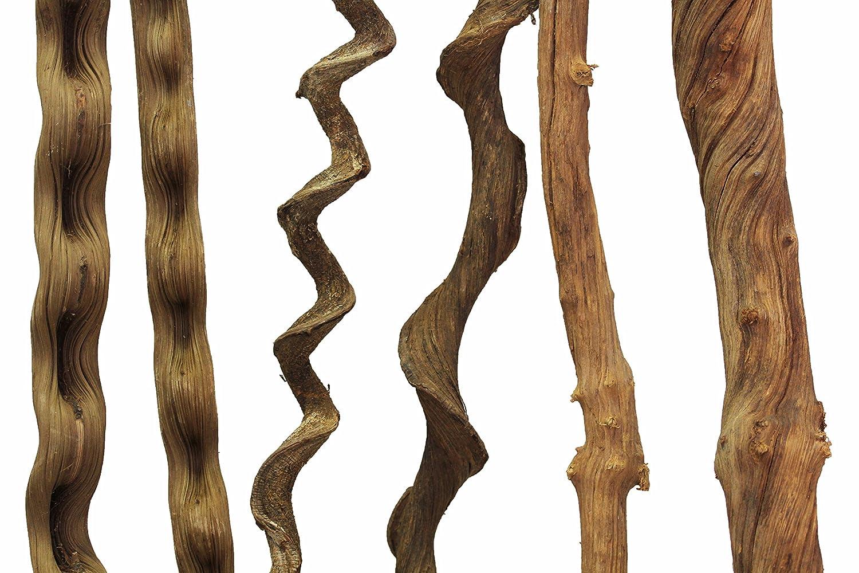 REPTILES PLANET Liane naturelle pour terrarium reptiles Jungle Liana longeur 100-120 cm diamètre 3-4 cm REPU5