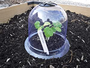 6-Pack! GrowAway Small Reusable Plastic Mini Greenhouse, Garden Cloche Dome, Plant Covers Frost Guard Freeze Protection for Plants Outdoors, Garden Tools, Garden Accessories - 7.87