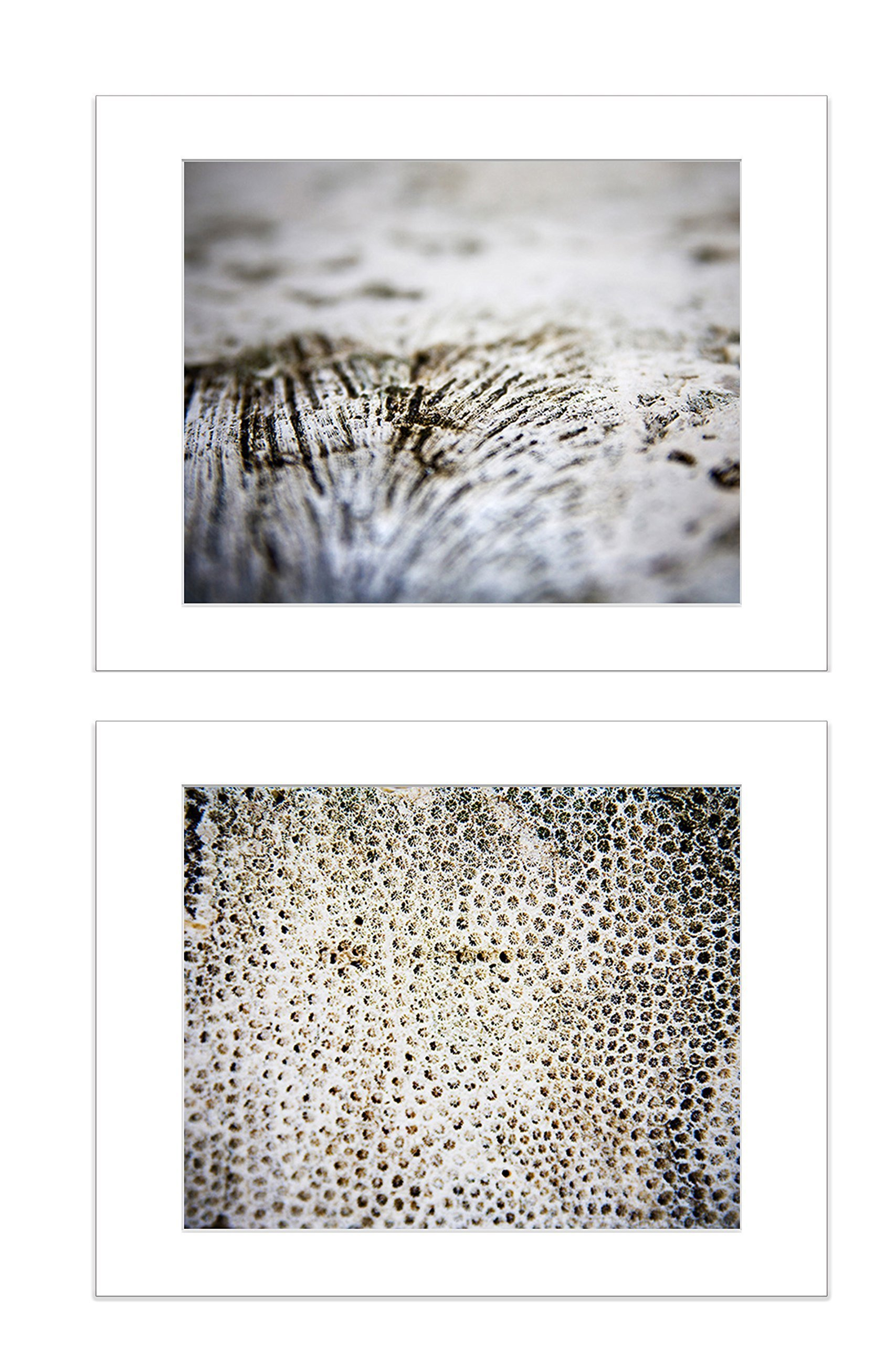 Set of 2 5x7 Inch Matted Photos Abstract Coral Reef Marine Life Underwater Beach