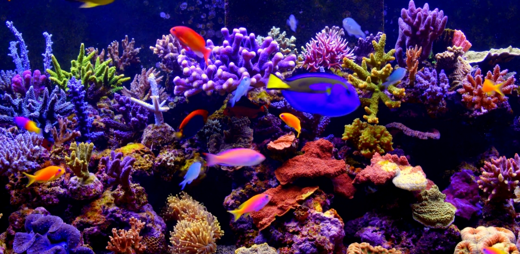 Amazon.com: Aquarium 4K video live wallpaper: Appstore for Android
