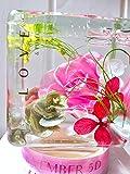 プレゼント お誕生日ギフト 人気 プレゼント ハーバリウム Cubic Glow シリーズ Pipi (ピピ)インテリアオブジェ お誕生日 お祝い 開店祝 風水 結婚お祝い 結婚記念日 夏の贈り物 プリザーブドフラワー ドライフラワー お花 お中元 フラワーバレンタイン バレンタインチョコレート ホワイトデー 母の日 父の日 彼女へのプレゼント 人気のフラワーアレンジメント